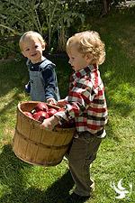 toddlers_basket_apples